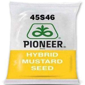 DuPont Pioneer 45S46 MUSTARD SEED (सरसों बीज)