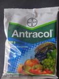 Antrocol