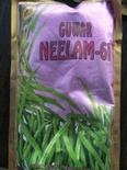 ग्वार नीलम 61