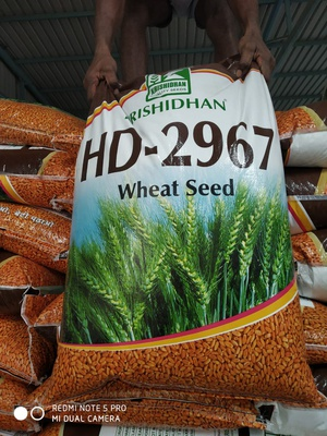 2967 wheat seed