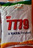 बाजरा बीज टाटा धान्या MP 7779