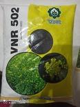 vnr502 mustard seed